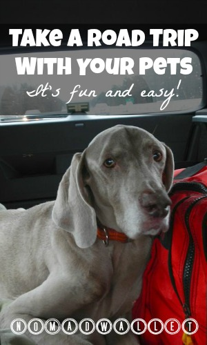 Road trip with pets